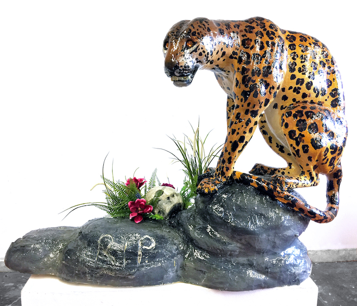 Edie Monetti, Leopard trophy, 2017