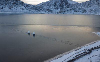 An Arctic Procession by Stephanie Imbeau