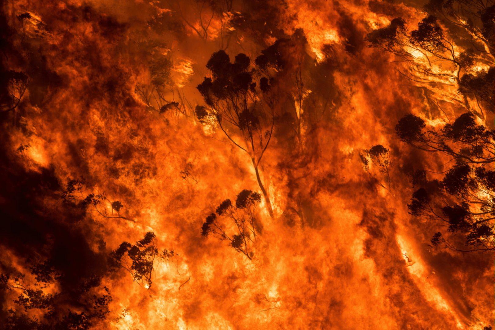 Artist and activist HAYDEN FOWLER on the Australian bushfires