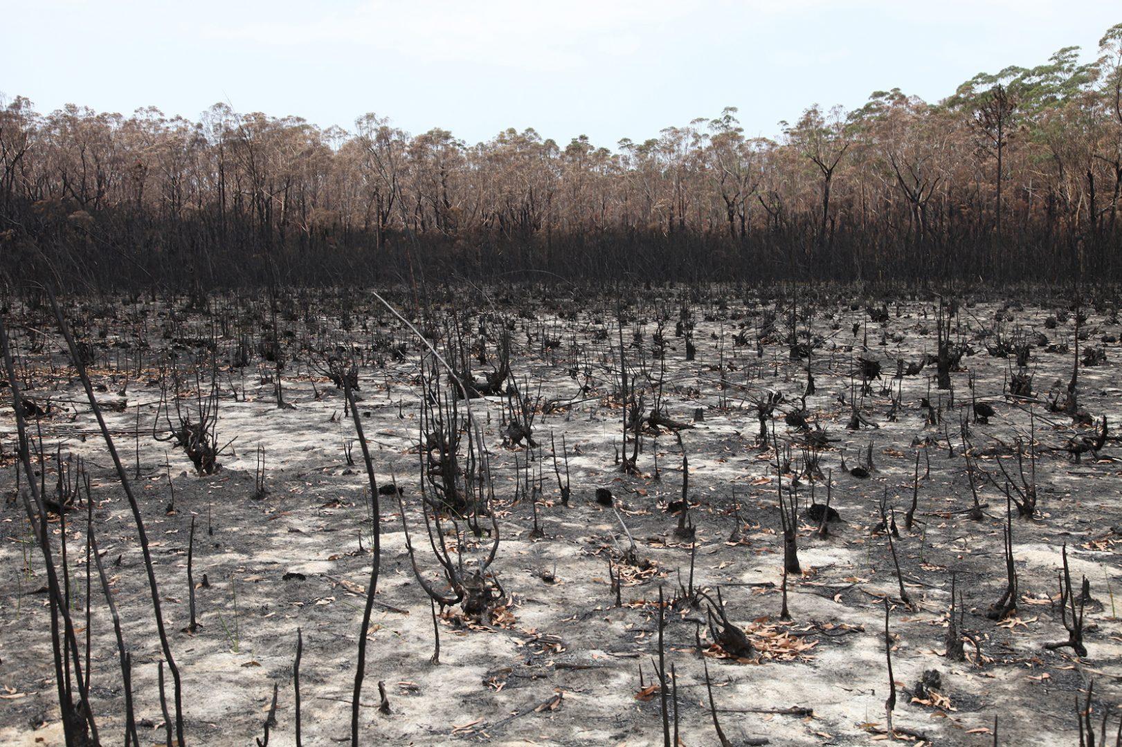 Estaurine Swamp with burnt forest in background, photo credit: Hayden Fowler