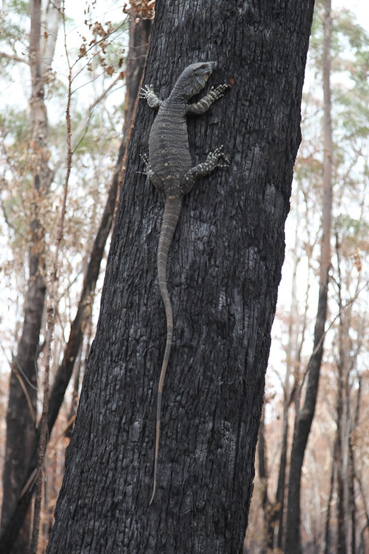 Artist and activist HAYDEN FOWLER on the Australian bushfires 6