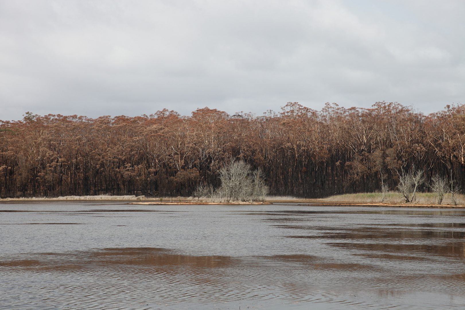 Artist and activist HAYDEN FOWLER on the Australian bushfires 9