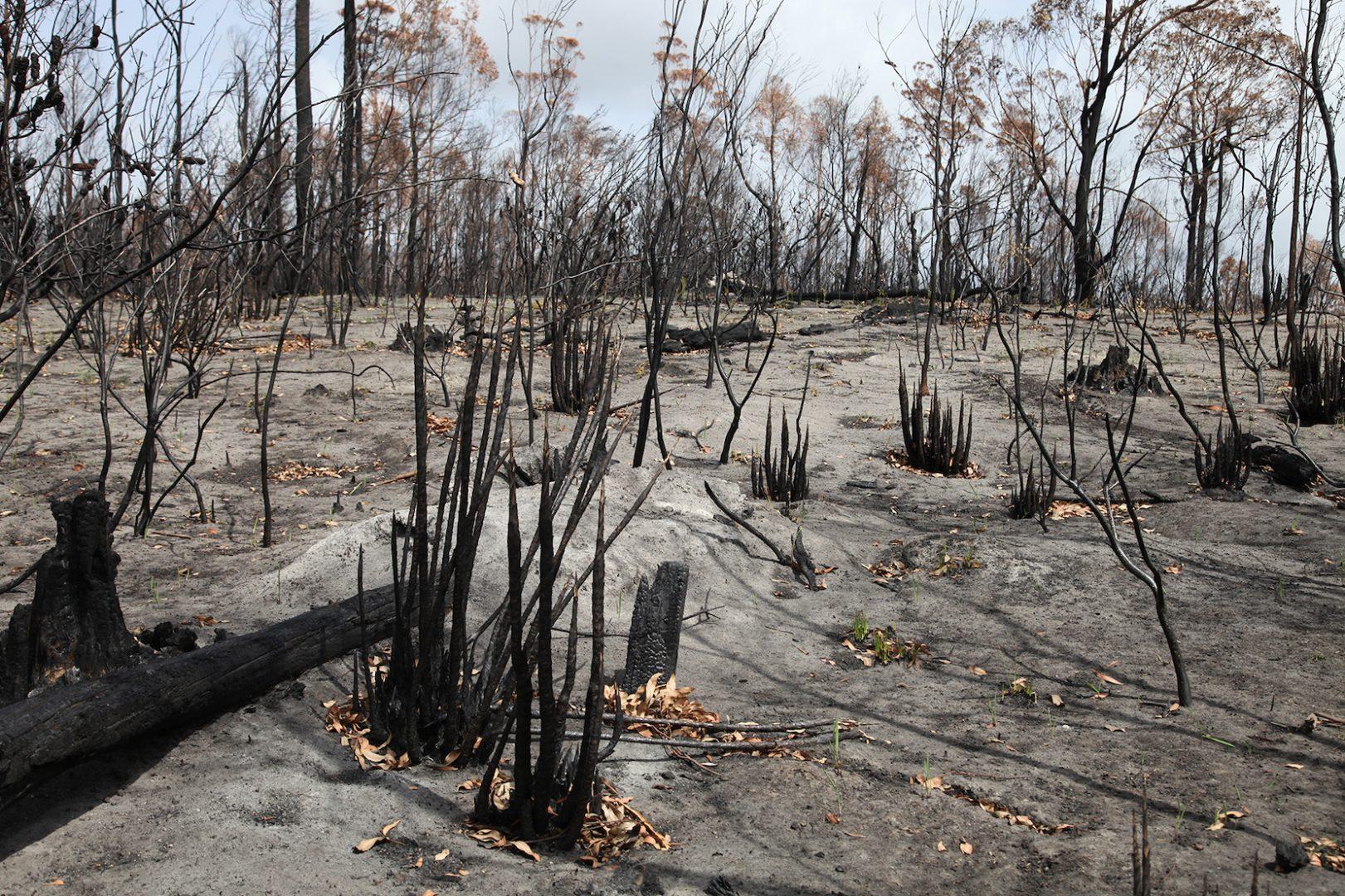 Artist and activist HAYDEN FOWLER on the Australian bushfires 8