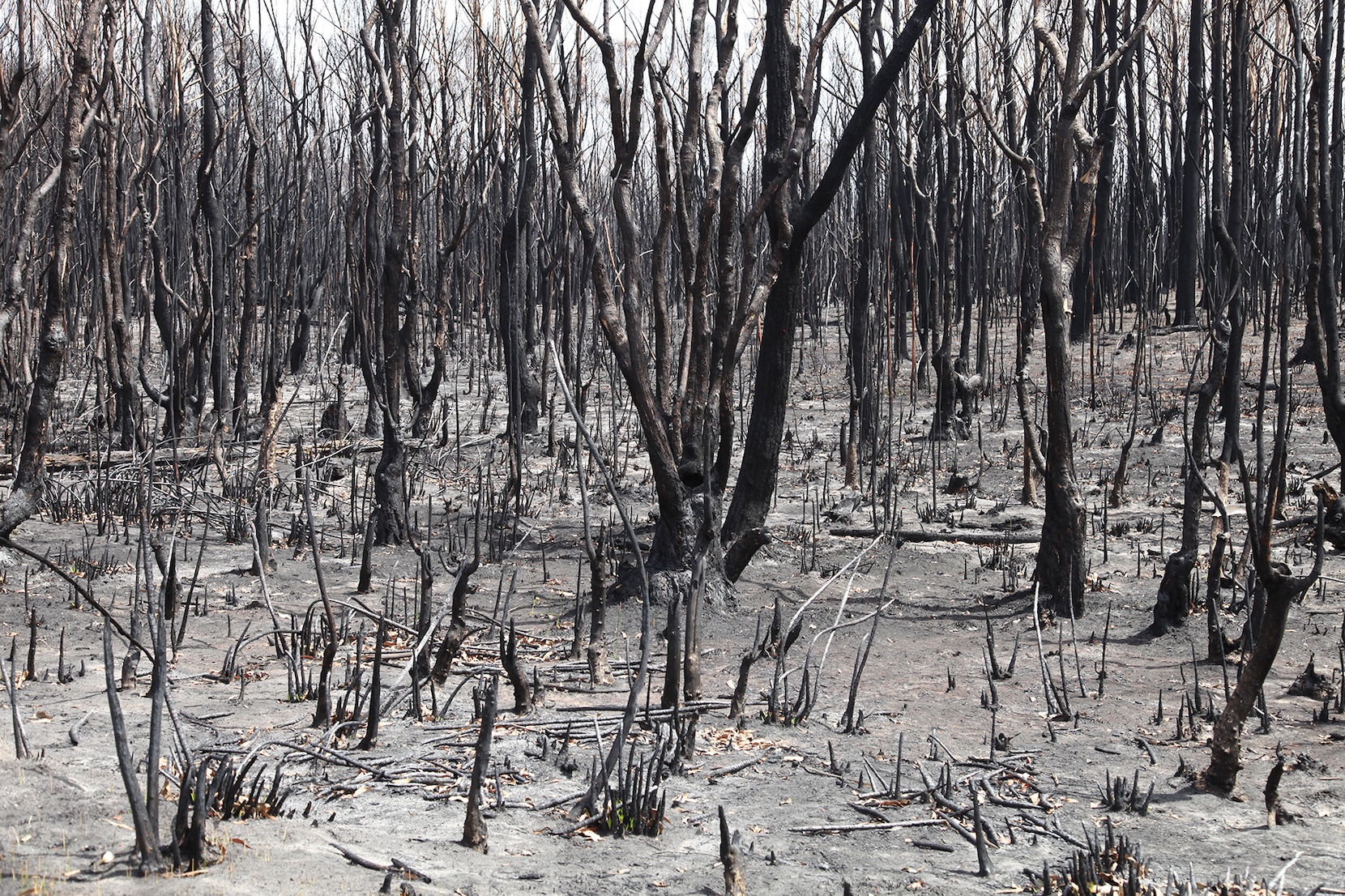 Artist and activist HAYDEN FOWLER on the Australian bushfires 38