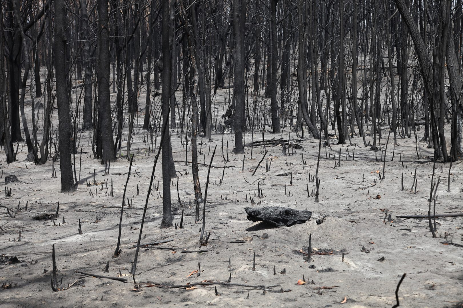 Areas with complete burning, including forest canopy, photo credit: Hayden Fowler