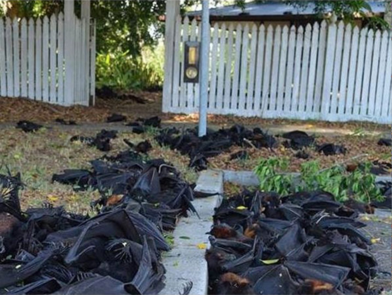 Artist and activist HAYDEN FOWLER on the Australian bushfires 5