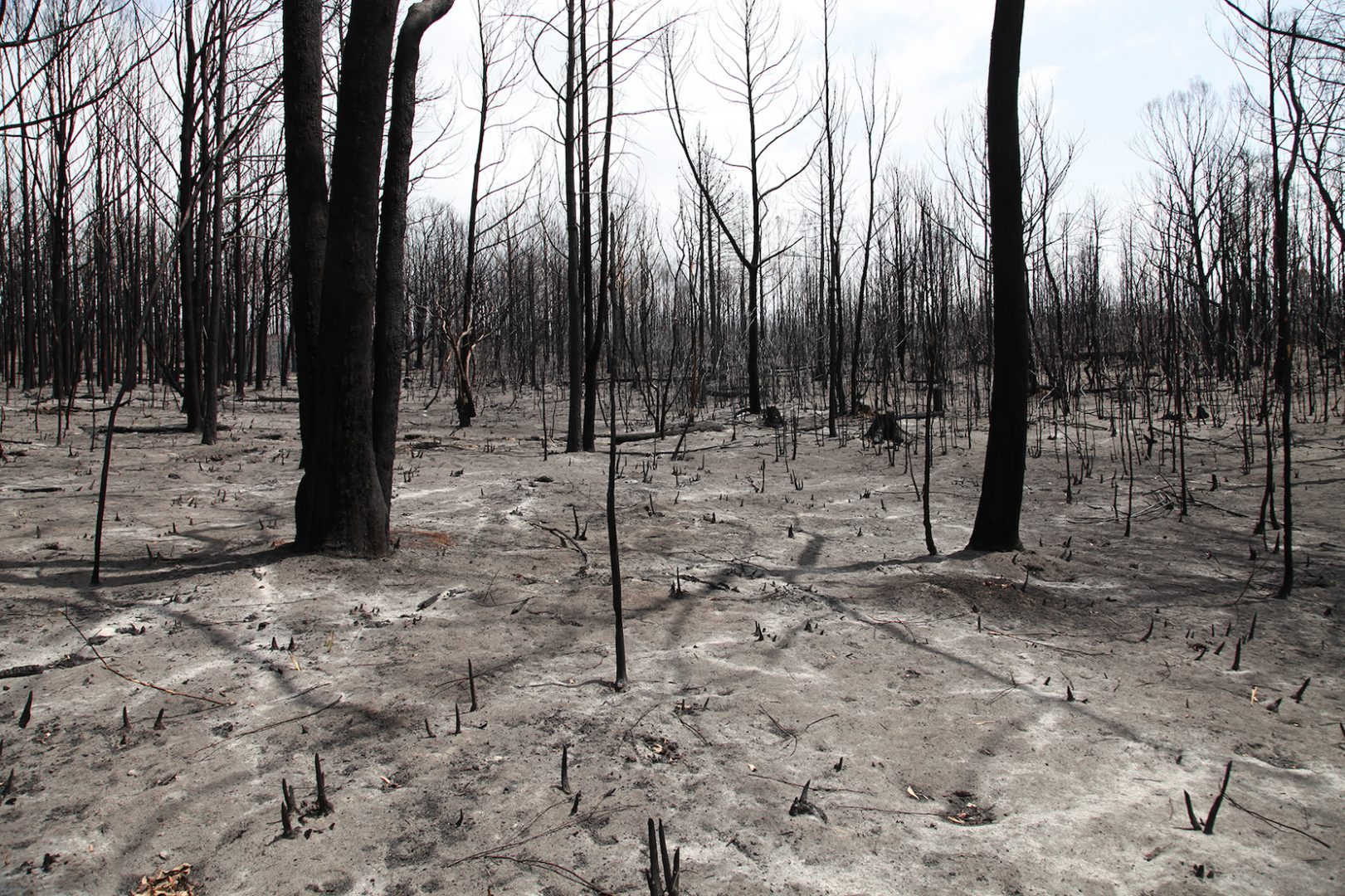 Artist and activist HAYDEN FOWLER on the Australian bushfires 7