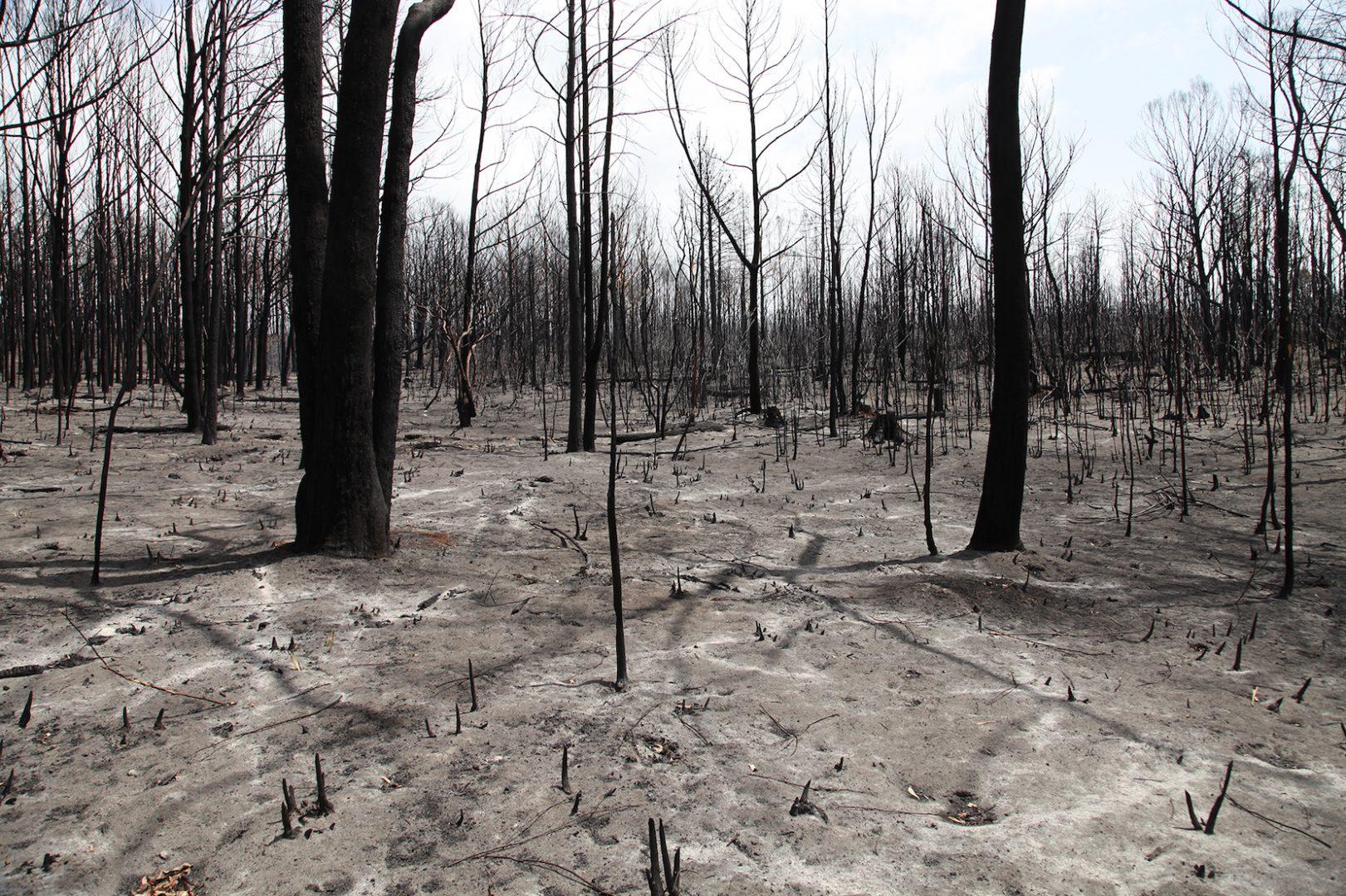 Artist and activist HAYDEN FOWLER on the Australian bushfires 7